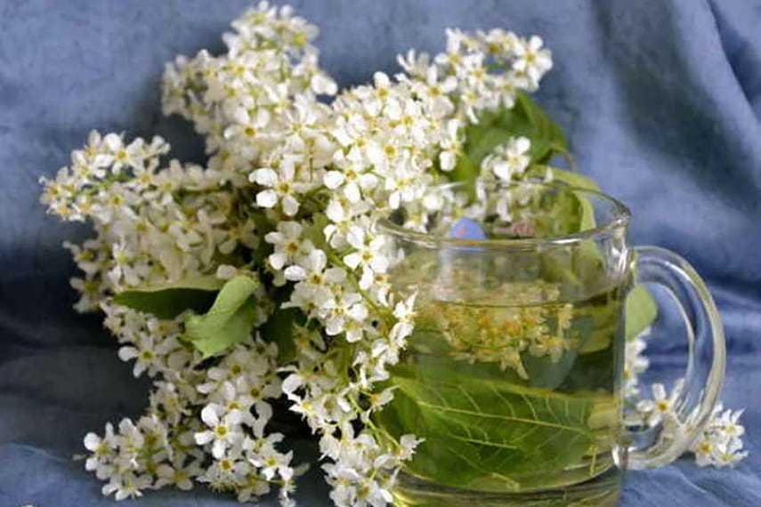Можно ли и какой пить чай при поносе? | компетентно о здоровье на ilive