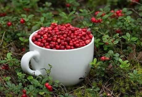 Варенье из клюквы в домашних условиях: 17 лучших рецептов + правила выбора ягод и особенности хранения заготовок на зиму
