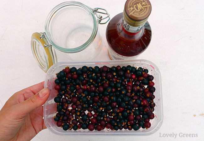 Рецепты красносмородинового ликера, приготовление из ягод ассорти, коктейлей