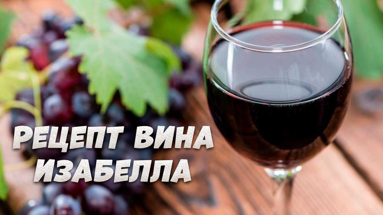 Вино из винограда изабелла: простые рецепты приготовления