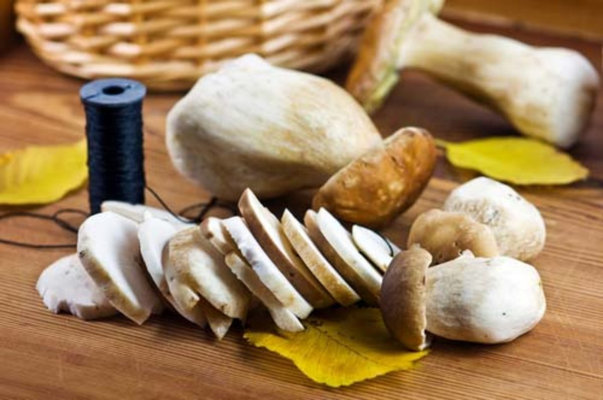 Как замораживать белый гриб на зиму: основные принципы Правила обработки Рецепты заморозки грибов и бульона Техника и срок хранения