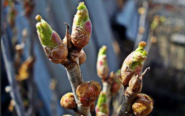 Настойка из смородины на самогоне: разнообразие сырья, рецепты и хранение