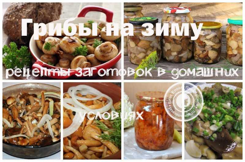 Рецепты маринованных белых грибов: самые вкусные варианты приготовления