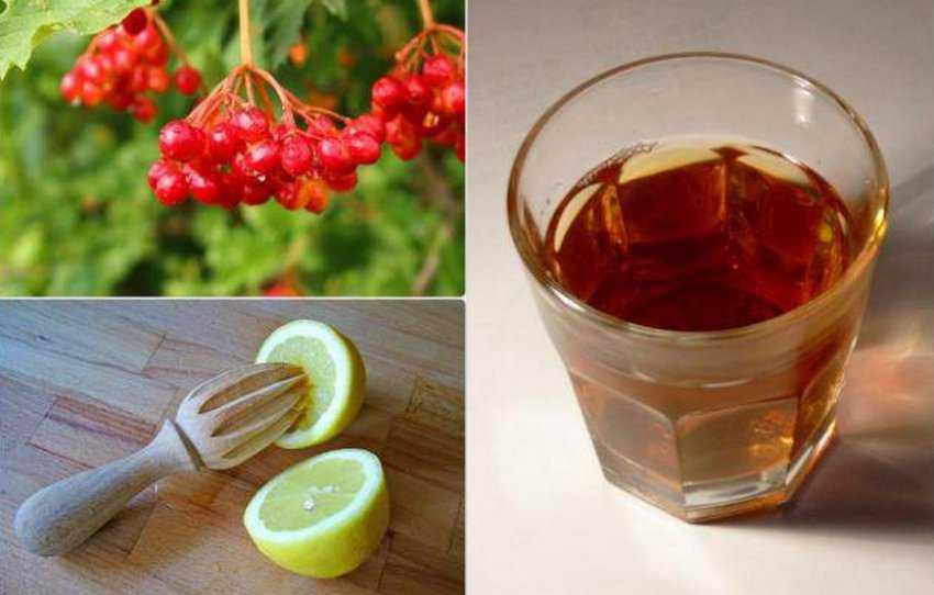 Настойка из калины — рецепты на водке, на спирту, свойства | здоровье и красота