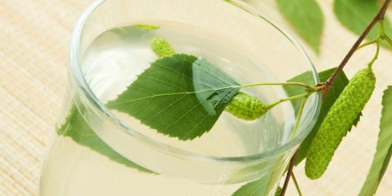 Изготовление вина из березового сока в домашних условиях