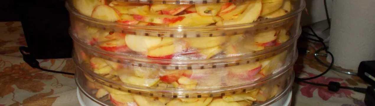 Как сушить яблоки в духовке газовой плиты на противне и решетке: при какой температуре и сколько времени? русский фермер
