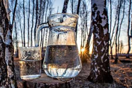 Правила добычи, заготовка и сбор березового сока. как правильно березовый сок собирать. » сусеки