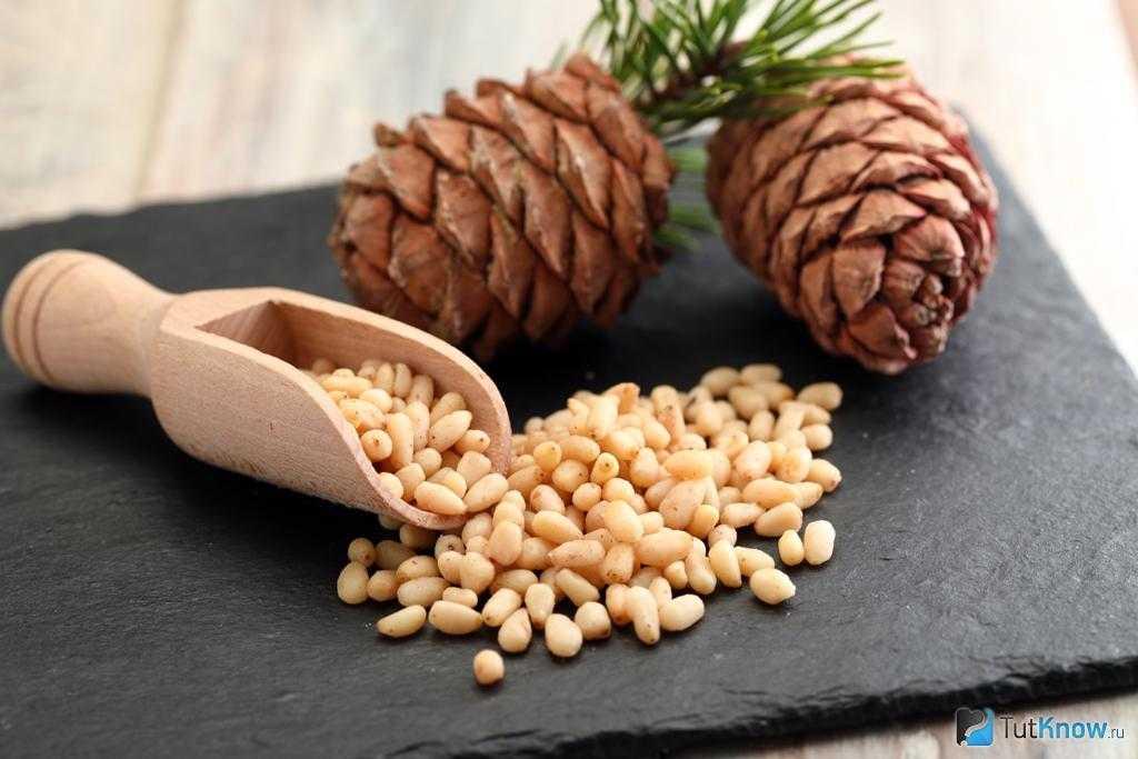 Самогон на кедровых орехах: польза и вред, рецепт, сколько орехов класть, как правильно и сколько времени настаивать
