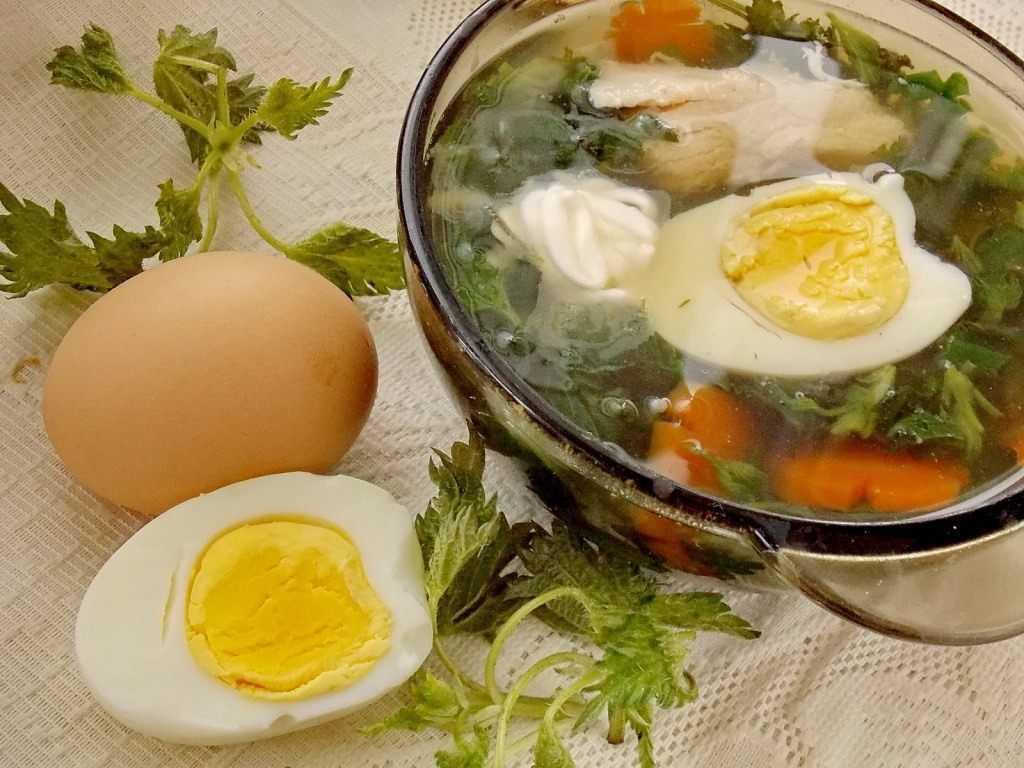 Кислые щи из квашеной капусты: польза, секреты приготовления, рецепты супа с мясом и грибами