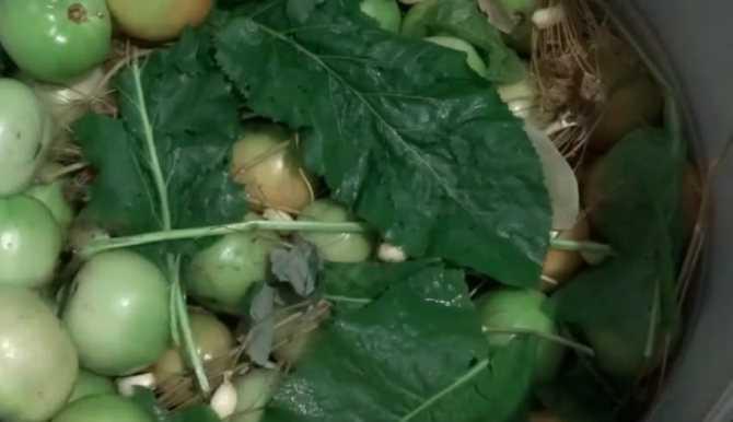 Зеленые помидоры, как бочковые: засаливаем на зиму — только проверенные рецепты