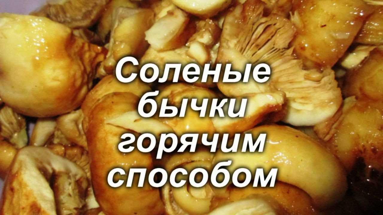 Лучшие рецепты, как засолить грибы бычки в домашних условиях холодным и горячим способом