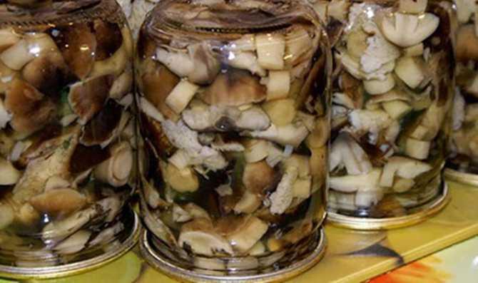 Что можно приготовить из грибов рядовок: рецепты блюд