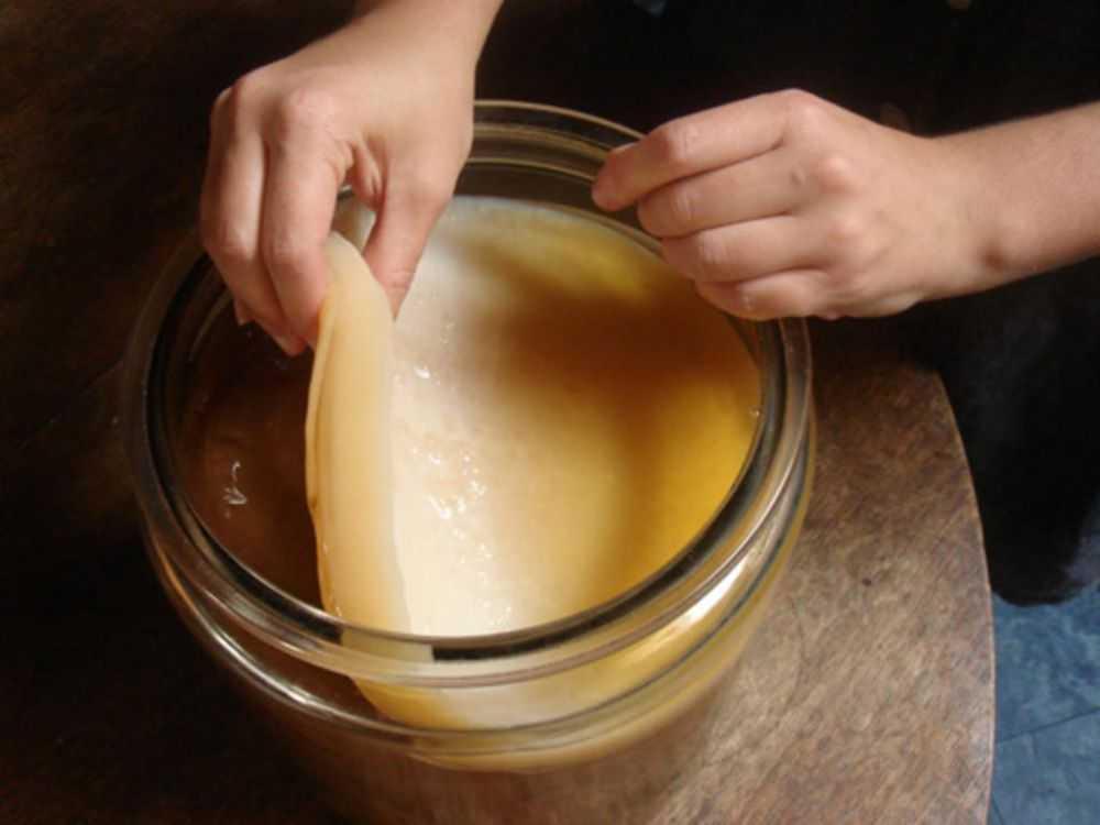 Изучение физико-химических свойств раствора чайного гриба во время его культивирования