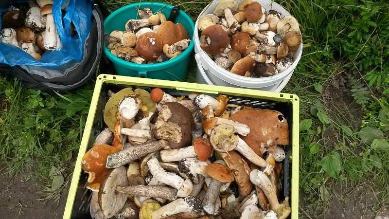 Хранение грибов зимой: сушеных, мороженых, жареных, способы консервации, продолжительность хранения, как сохранить в походных условиях