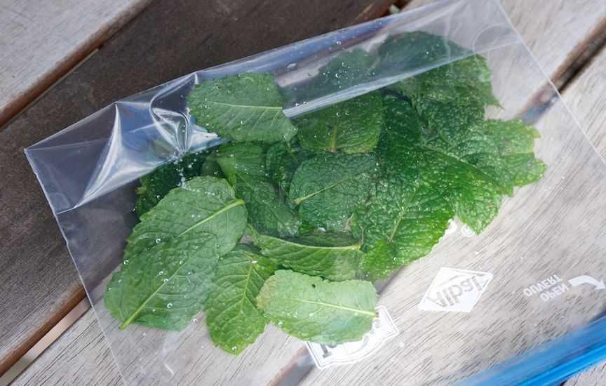 Как сохранить листочки мяты на зиму