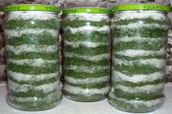 Петрушка на зиму: заготовки с солью, как засолить в банке или заготовить другими способами (сушкой и заморозкой)