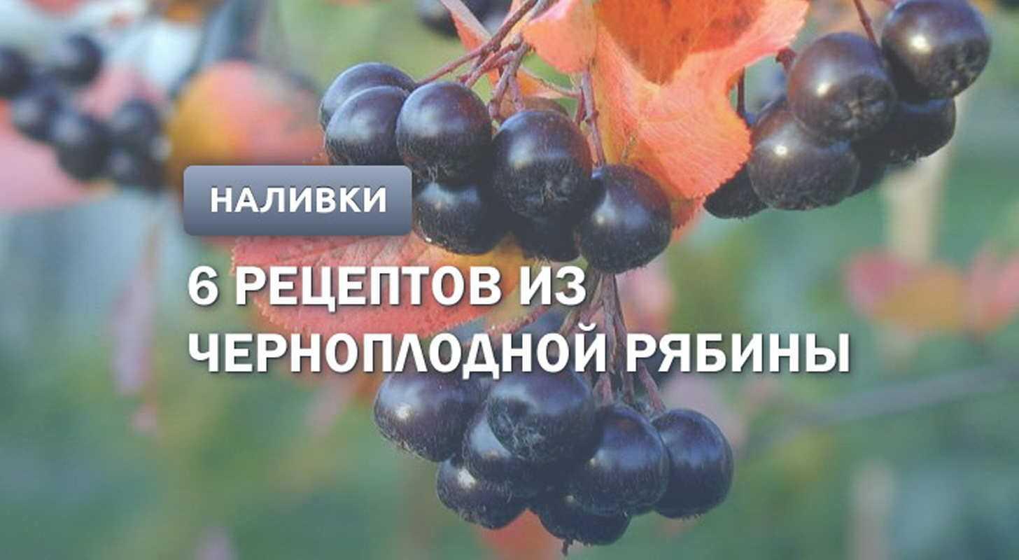 Черноплодная рябина - лечебные свойства, противопоказания, состав