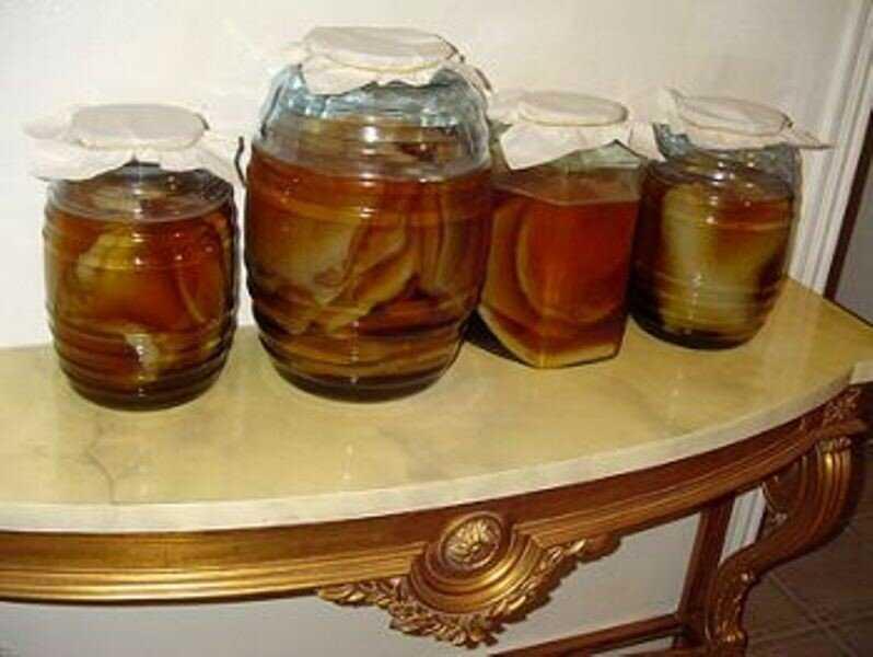 Где можно взять чайный гриб. История появления и происхождение. Существующие разновидности. Как образуется чайный гриб, где встречается в природе.