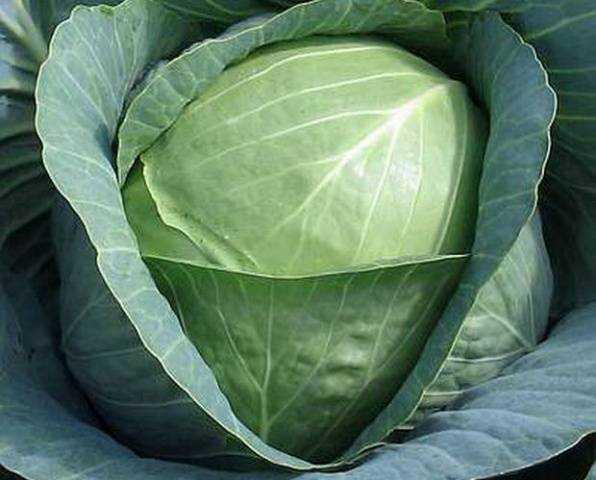Как солить капусту: простой рецепт на зиму