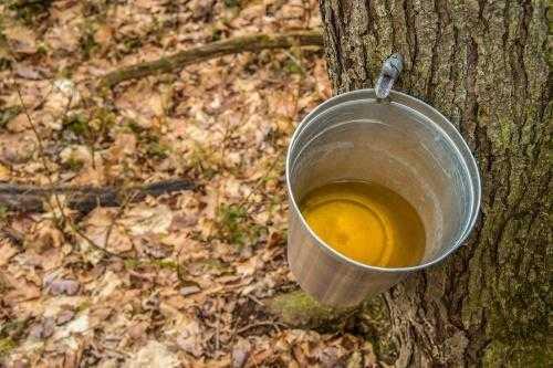 Черная смородина на зиму: 43 рецепта заготовок » сусеки