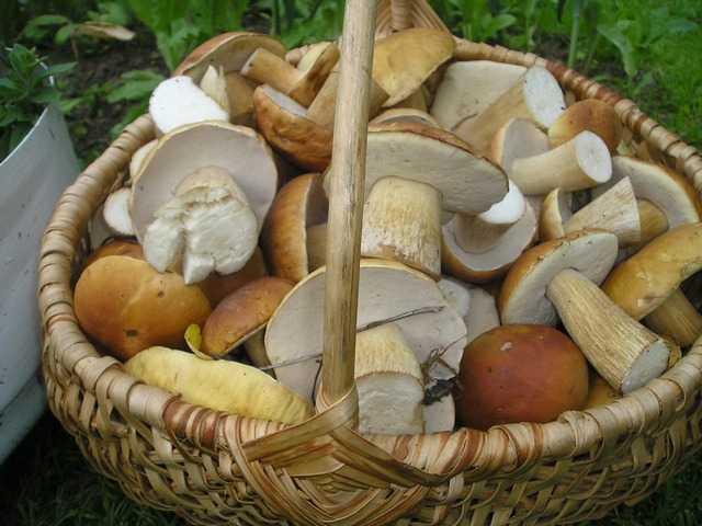 Как солить белые грибы на зиму в банках: простые рецепты с фото