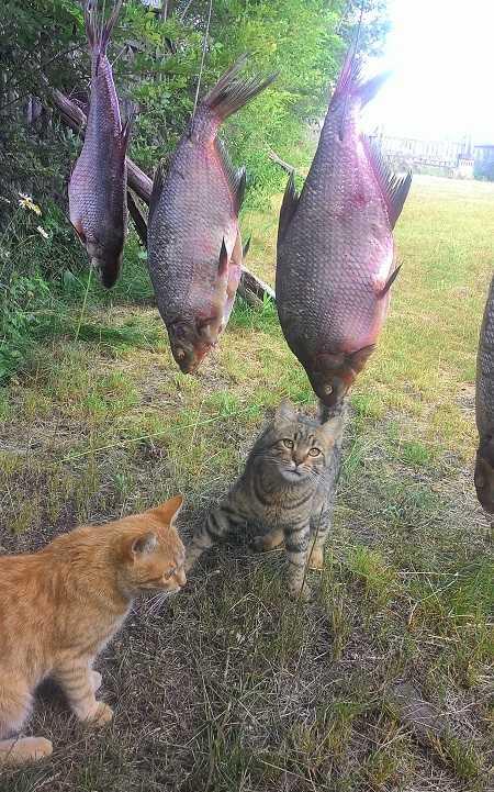 Срок хранения копченой рыбы