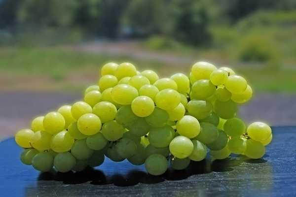Как сделать вино из винограда в домашних условиях: простой рецепт