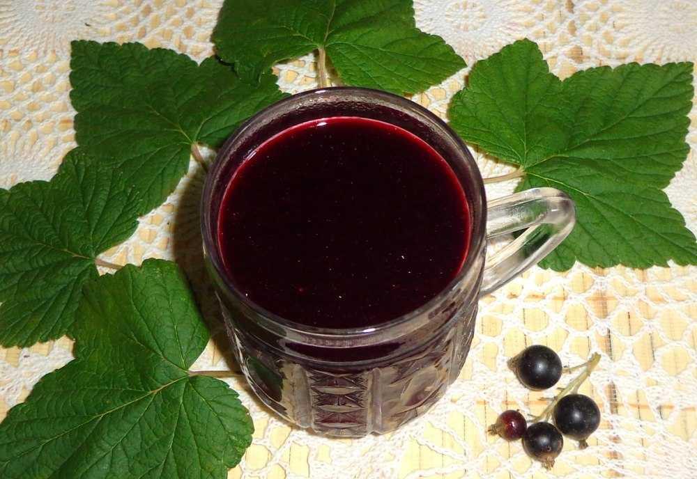 Красная смородина: польза ягод, заготовка и применение
