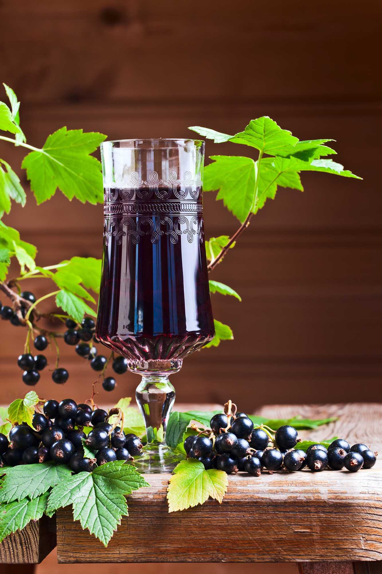 Вино из черной смородины в домашних условиях — простой рецепт