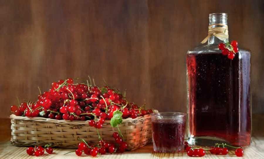 Вино из чёрной и красной смородины в домашних условиях - 6 рецептов
