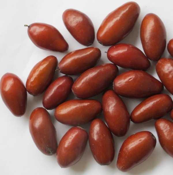 Варенье из зизифуса (унаби): питательные и лечебные свойства, химический состав. Рецепты приготовления варенья из зизизфуса: классический, с корицей, с медом, без косточек.