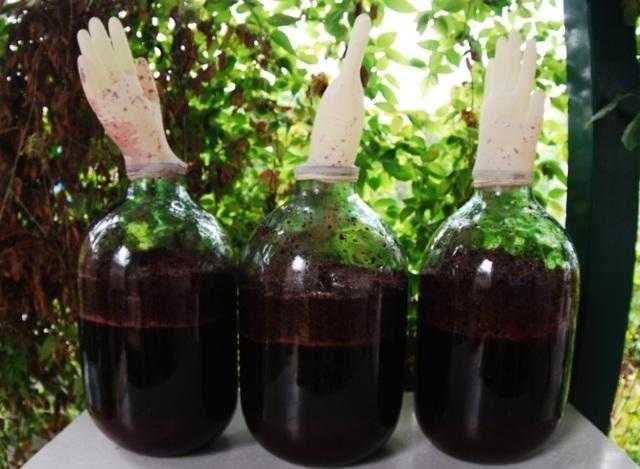 Рецепт приготовления вина из терна в домашних условиях