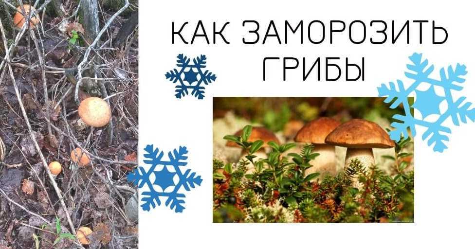 6 рецептов заморозки грибов на зиму в домашних условиях