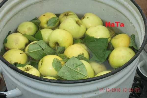 Моченые яблоки в домашних условиях. рецепты мочения яблок в банках и бочке на зиму с фото