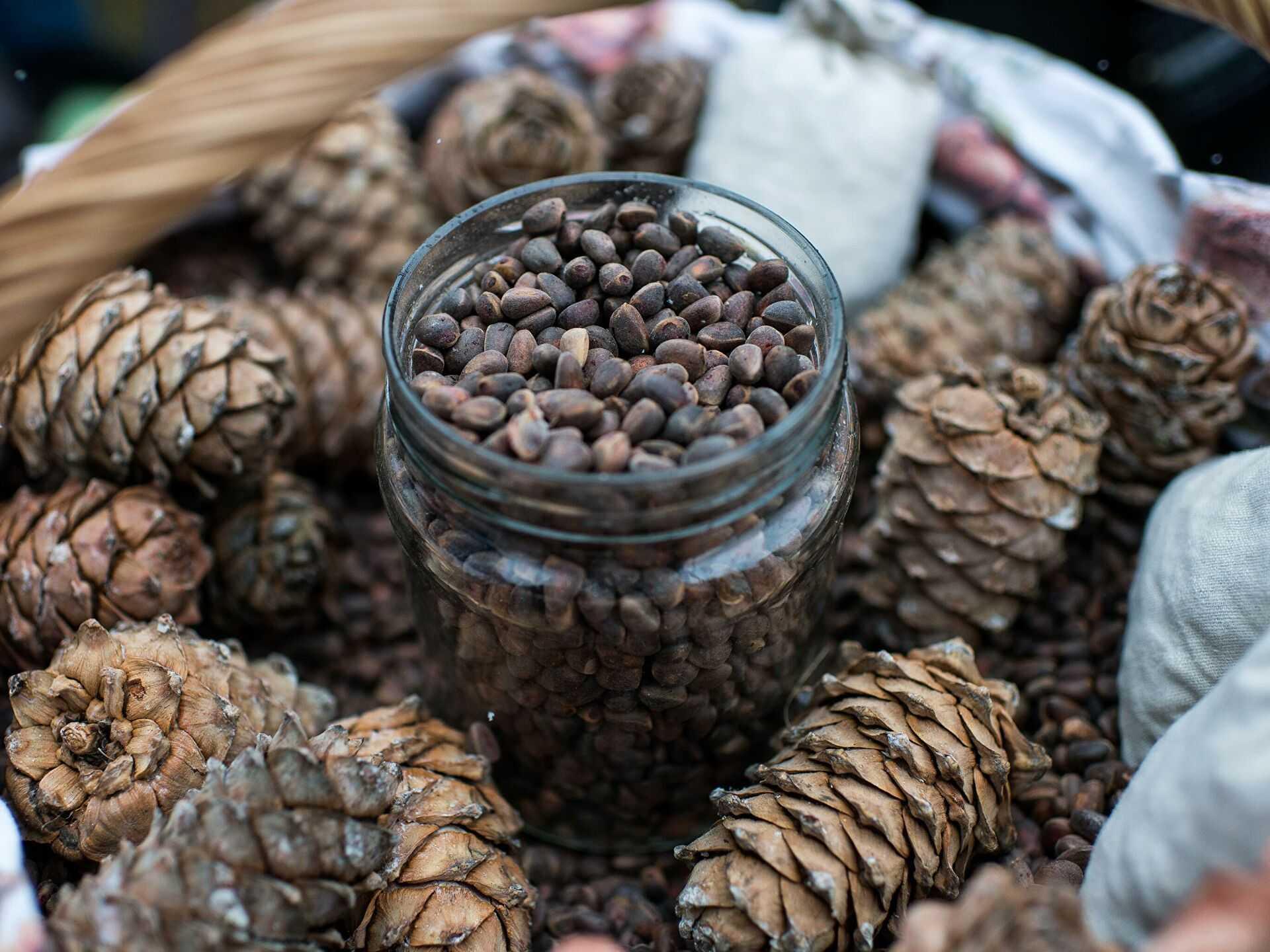 Самогон на кедровых орехах: польза и вред, рецепт