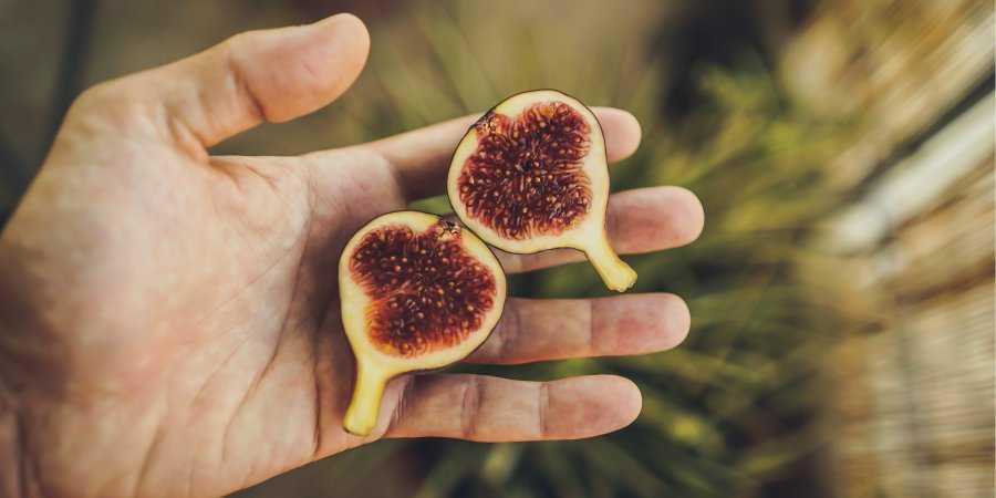 Свежий и сушеный инжир — польза и вред для организма от свежих, сушеных, вяленых плодов