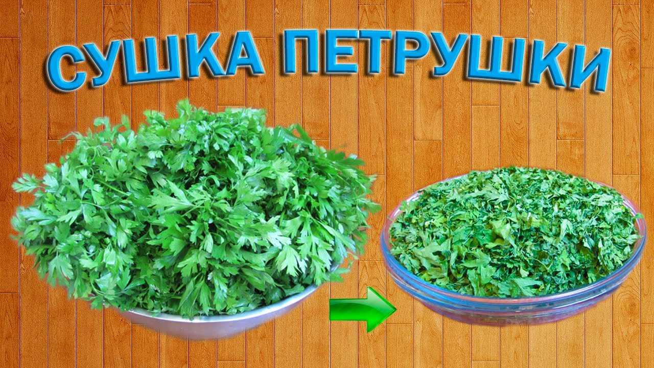 Сушеная морковь в домашних условиях: в духовке, микроволновке и электросушилке русский фермер