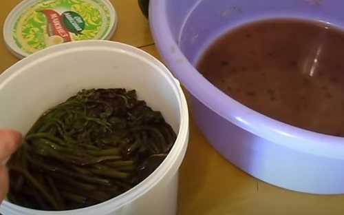 Папоротник орляк – рецепты приготовления + заготовка на зиму