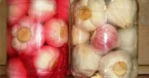 Как засолить маслята холодным способом. как засолить маслята в домашних условиях: рецепты приготовления