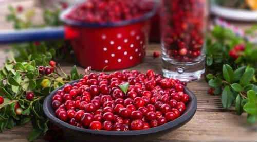 Брусника протертая с сахаром: рецепт и 8 способов приготовления на зиму