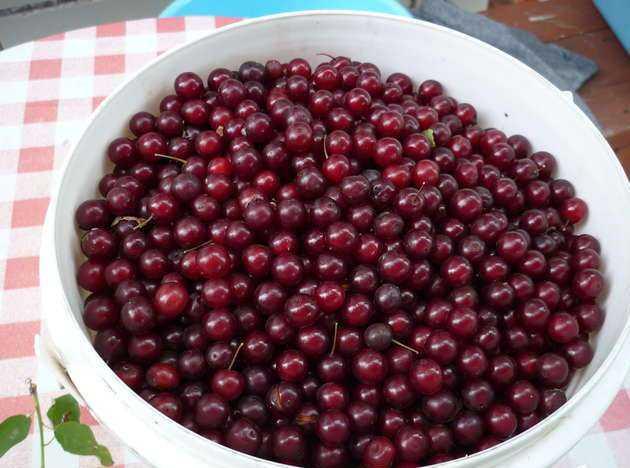 Заморозка ягод: как сохранить запас витаминов и ценные свойства