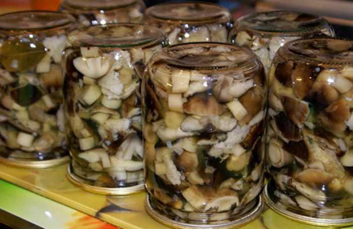 Топ 15 рецептов приготовления рыжиков на зиму горячим и холодным способом, со стерилизацией и без