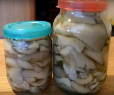 Вешенки быстрого приготовления: маринованные, на зиму, 11 блюд