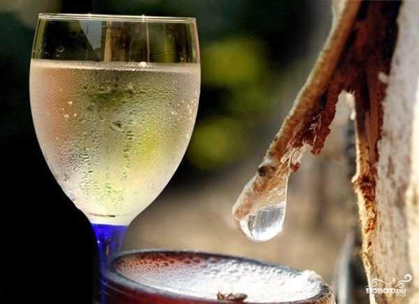 Рецепты изготовления шампанского из березового сока в домашних условиях: с выпариванием, без кипячения, с изюмом, дрожжами, с добавлением вина и водки.