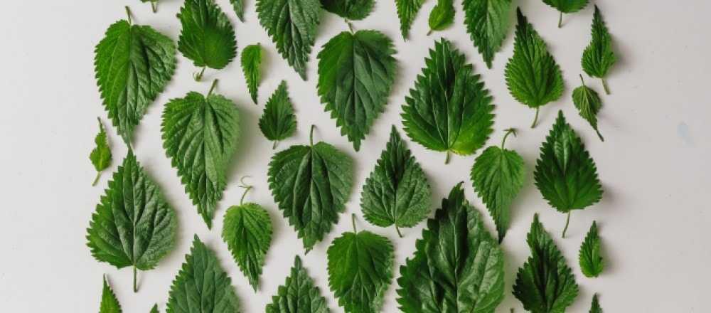 Каша из тыквы: рецепты быстро и вкусно (пошагово с фото)