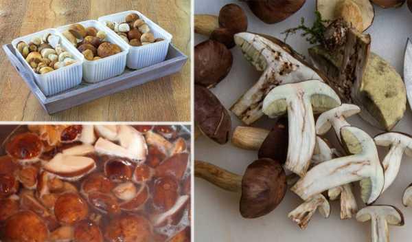 Сколько можно хранить в морозилке замороженные грибы: сроки и правила для домашних условий