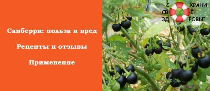 Что можно приготовить из ягоды санберри. что за ягода санберри?