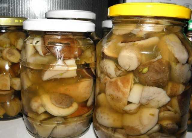Икра из соленых грибов: 19 лучших рецептов приготовления, правила хранения