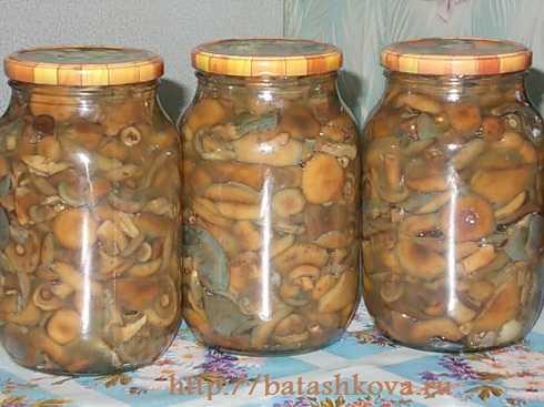 Маринованные рыжики на зиму — пошаговый рецепт с фото