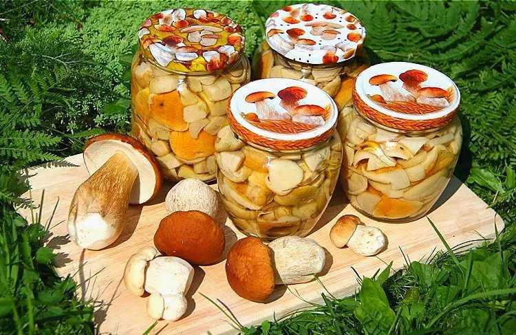 Маринованные грибы: подборка лучших рецептов